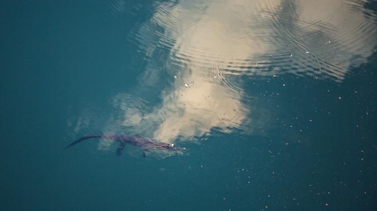 Freshwater-Crocodile-Kimberley-Gary-Annett-2